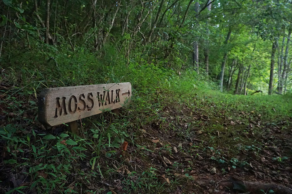 MossWalkTrail-1000px