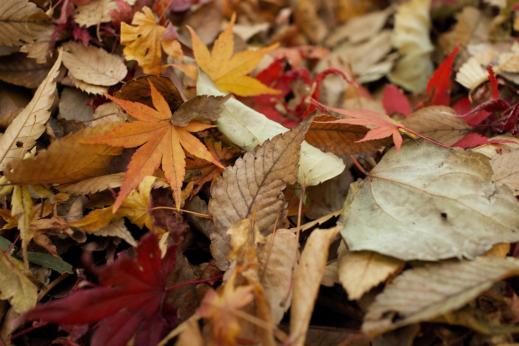 ColorfulLeaves-1800px