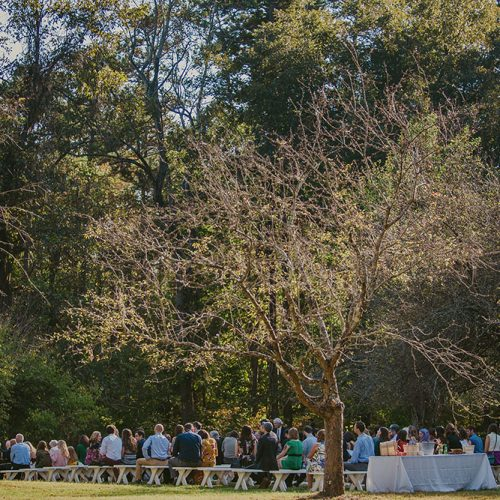 wedding ceremony in apple orchard featuring guests sitting on white benches